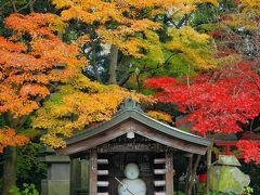 12月に染まる千葉の紅葉 本土寺