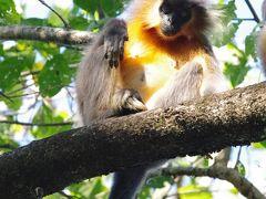 2019年12月7日普通の土日 クムグリ旅行 世界遺産マナス国立公園で予定通りの早朝ジープサファリ編