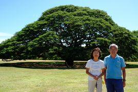 ハワイ旅行記2019 9月5日 この木なんの木気になる編