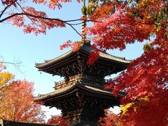 紅葉が真っ盛りの京都を楽しく観光できました