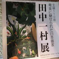 冬の奄美大島へ Vol.1[名瀬エリア編](2019年1月)