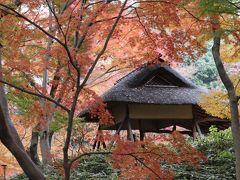 東京の紅葉名所、
