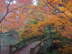 京都 恒例の師走紅葉狩り 神泉苑・府立植物園・真如堂