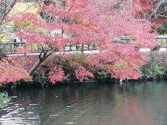 英語のできないおじさんの地元旅  名古屋 東山動植物園