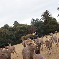 鹿と遊びに奈良へ!