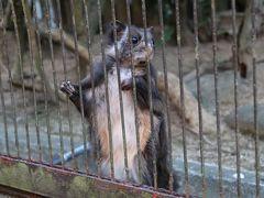 愛媛県立とべ動物園初日 光の動物園