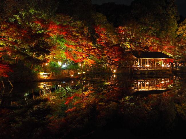紅葉のライトアップが駅近で観賞できると聞き、東山動植物園にふらりと訪問してみた。<br /><br />場所柄、子供騙しかな(失礼!)と思っていたら、予想に反して見事な紅葉。<br /><br />しかも水面へ映り込みが鮮やかでカメラ次第で映える写真に。<br /><br />シャバーニだけじゃない、凄いぞ東山動植物園。