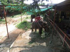 プーケットで2度目の象乗り!今度のゾウさんは、子供でした。