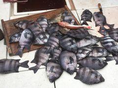 淡路島 由良沖のサンバソウ釣り