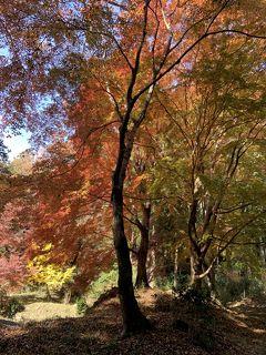 紅葉を見に、奈良の正歴寺と弘仁寺へ