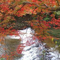 大阪泊の京都旅    2日目