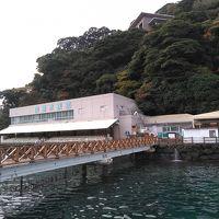 2019 伊豆紅葉家族旅行(2)〜あわしま、沼津、富士〜