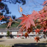 筑前の小京都☆秋月城跡の紅葉 ~浮羽稲荷~調音の滝~三連水車