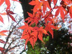 六義園で紅葉を満喫♪~2019~