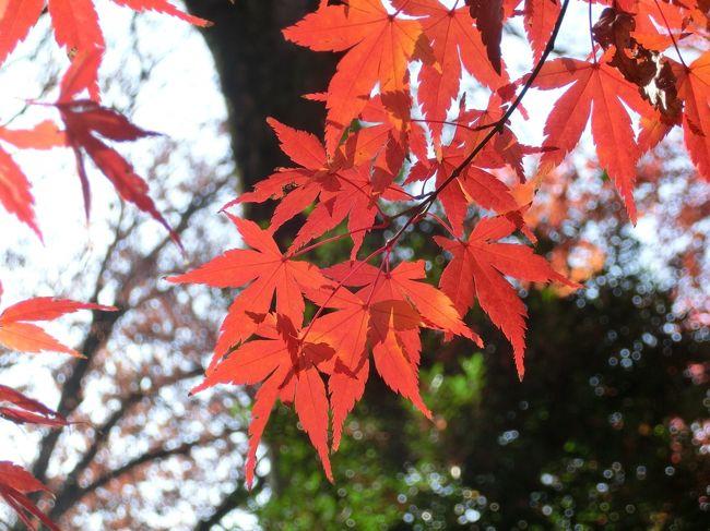 すっごい久々のお出かけ~!かつ今年最後になってしまったけど、紅葉を見に六義園へ行ってきました~。入園料(¥300)<br />