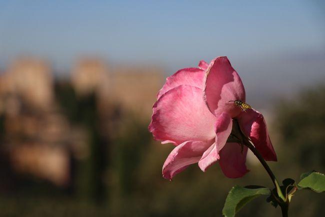 2019 レンタカーで巡る秋のスペイン【4】 ~世界遺産・アルハンブラ宮殿~