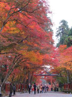 2019京都の紅葉 №22 「日吉大社」の紅葉