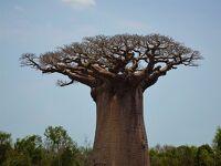 ◆マダガスカル旅◆⑨秘境と絶景バオバブづくしの3日間(モロンベ~アンドンビリー~アンダバドアカ)