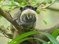 動物ずくめのシンガポールひとり旅 4 リバーサファリ 続・アマゾンの部