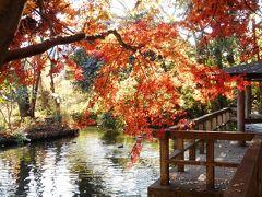 晩秋の日野、黒川清流を歩く