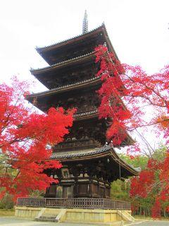 2019京都の紅葉⑱ 龍安寺経由「仁和寺」の紅葉を見る