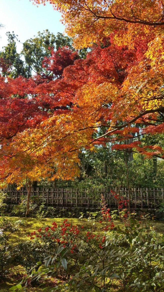 紅葉の季節、ひと、ひと、ひとの京都に行かずとも<br />休日でもそんなに混みあうことのない万博公園で<br />紅葉を満喫することができました。<br />(ま、京都にも行っちゃうんですけどね(^_^;))<br />