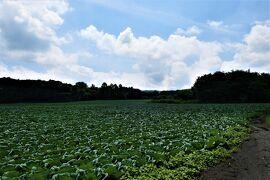 夏の軽井沢♪ Vol.2 ☆北軽井沢:ある日のキャベツ高原の風景♪