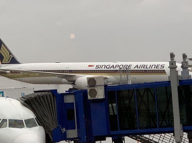 2019年末~2020年始家族旅行でシンガポールへ行く事になりました。<br />シンガポールは昨年末に来てから一年ぶりです。<br />昨年は羽田からでしたので、名古屋からシンガポールへは約2年半弱ぶりです。<br />その時は、初めての家族旅行で初めてのシンガポールという事でほとんど分からないままの旅行でした。<br />それから2回旅行し、今回で4回目のシンガポールです(^ ^)<br /><br />今回はセントレアホテルに前泊しました。また、セントレアの駐車場も予約できたのでとても助かりました。<br /><br />Wi-Fiルーターも郵送してもらったり、両替も以前行った時のシンガポールドルが残っているから出発当日の朝も何もしなくて良いので楽でした。<br /><br />毎回シンガポール航空ですが、今回もシンガポール航空です。そして、今回は初B787-10搭乗です!<br /><br />機内で楽しく過ごす事ができました。<br /><br />前泊 セントレアホテル <br />初日 フライト~到着<br />ホテル到着後 プールへ行きその後コロニーで夕食。<br /><br />12/30 NGO-SIN SQ671 B787-10<br />宿泊 リッツ・カールトンシンガポール