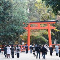 下鴨神社から糺の森や河合神社を歩く午後のひととき+京都駅イルミネーション