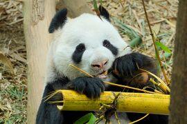 動物ずくめのシンガポールひとり旅 5 リバーサファリ 中国の部