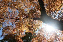 秋の山中湖/河口湖♪ Vol.12 ☆山中湖:「旭日丘湖畔緑地公園」もみじ祭♪