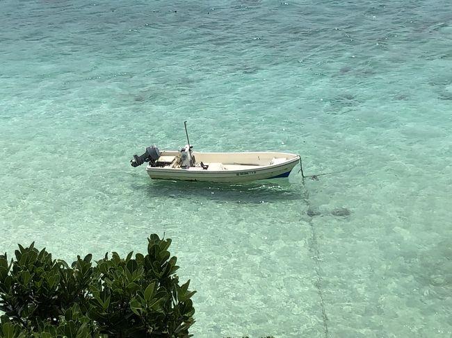 5歳の息子と、マグロ目当ての夫と3人で石垣島に行きました。<br />ギリギリに予約したので、なかなかホテルが空いておらず、なんとか石垣シーサイドホテルを予約できました。<br />夫に息子を預けてダイビングもできました。マンタは見られませんでしたがものすごくきれいでした。<br /><br />石垣島の食事はおいしかったです。
