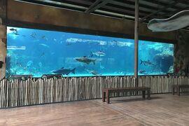 動物ずくめのシンガポールひとり旅 6 リバーサファリ 世界の川の部