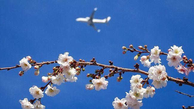 その2からの続きです。<br /><br />写真は、東野地区に咲く十月桜と伊丹空港を飛び立った飛行機。