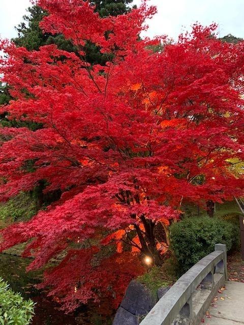 3日目は奥入瀬渓流を 散策 十和田湖から弘前城へ