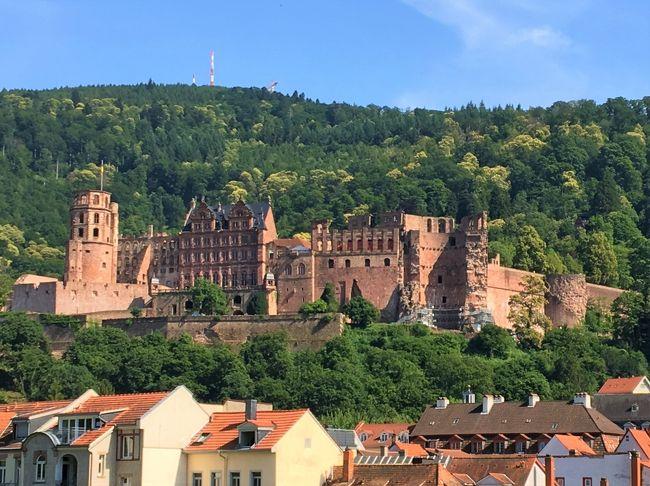 2019/6/25(火) 10日間のドイツ周遊の旅も8日目です。<br />ローテンブルクを発ち、午後ハイデルベルクにやって来ました。<br />子供の頃「アルトハイデルベルク」を読んで、ドイツと言えば真っ先に覚えた都市でした。<br />小説の内容は忘れてしまいましたが、一度は来てみたかった街です。<br />半日の見学後はライン川下りの拠点、リューデスハイムに向かいます。