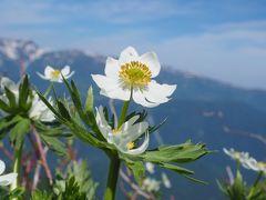 6月山行 強風の平標山でお花畑を満喫