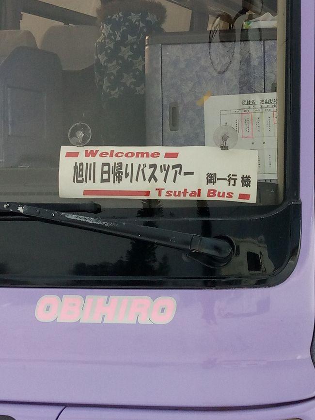 2020年明けましておめでとうございます。<br /><br />帰省の娘さんと地元のバス会社の日帰りバスツアーに<br />4名で参加してきました。<br /><br />『新春企画 旭山動物園へ行こう!』<br /><br />バスは朝7時出発のため、家を6時頃に出発し途中のコンビニで朝ご飯を調達。<br />セコマの大きいおにぎりは美味しいのです^^<br />ツアー参加人数は15名ほど、中型のバス。紫色でわかりやすい~^^<br /><br />南富良野の道の駅でトイレ休憩1回。<br /><br />11時頃あさひかわラーメン村到着~各自昼食を。<br />わたし達は、『山頭火』へ。 <br />醤油ラーメン、辛みそラーメン、とろ肉ラーメン塩、わたしは塩ラーメンを食べました。<br />お水はセルフサービスでソフトドリンクも飲み放題^^<br />以前帯広でもお店がありましたが、無くなってもう十数年経ちます、、<br />美味しいラーメンを頂いて、バスの時間までトイレを済まそうと、施設をぐるり~<br /><br />面白い、『ラーメン村神社』を発見!<br />参拝の仕方は、ふたりで…とのこと。恋愛成就系です^^<br />仕掛けがとても凝っていました。<br /><br />他に買い物施設は点在し、時間はいくらでもつぶせますが、買うものが無い(笑)<br />ほどなくして、バスが集合時間に到着し、同行者を乗せ、旭山動物園へ向かいます。<br /><br />動物園到着時の空模様は晴れていましたが、ペンギンの散歩が始まる頃に吹雪になり、<br />持っていたウルトラダウンコートを着込みました。<br /><br />東門から展示動物を見ていきました。<br /><br />ホッキョクグマのもぐもぐタイムの前に、見たかった「カバ館」を。<br />大きなカバが1頭、深いプールに潜ったり、<br />水面に顔を出し、ダイナミックに大きく口を開けて見ごたえ満点でした。<br />プールの上からと下の水中の様子が良く見えました。<br /><br />ホッキョクグマのもぐもぐタイムは並びましたが、順序良く案内され、<br />プールの中を餌を追いかけて泳ぐ様子が良く見られました。<br /><br />ペンギンの散歩はスタート時間前から場所取りが始まっていました。<br />早めに、、と、思っていましたが2列目。 <br />場所によって、また日によってペンギンの様子は違います。<br />この日は、キングペンギンのヒナは散歩に行かずお母さんペンギンは居残り、<br />散歩に出かけたお父さんペンギンも呼び戻さるハプニングにも遭遇^^<br />「キングペンギンのヒナをご覧になりたい方は、この後展示室で見てください。」と、<br />飼育係のお姉さんから案内がありました。<br /><br />時間を気にしながら、バスの集合場所へ。<br /><br />ツアー一行、バスに乗り込むと、次に向かうは、<br />お菓子屋さん『The Sun 蔵人』へ。<br />有名なお菓子屋さんらしく、わたし達のバスの出発までに<br />大型バスが次々と入ってきました。<br /><br />帰り足には薄暗くなり、帯広の出発地に戻ったのは20時過ぎ。<br /><br />少し遅い夕飯には、スープカレーをたべました。<br />ホームセンターの敷地内の「BELIEVE」。<br />スパイスで体が温まりました。<br /><br />とても長い1日になりました。<br /><br />個人で行くこともできますが、運転する家族に負担をかけるよりは、<br />時には、地元のバスツアーを利用して遊びにいくのも、アリですね。。(^O^)/<br /><br />バス会社様に感謝です。<br /><br /><br />