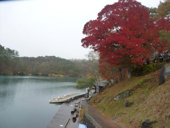福島県に移動して磐梯朝日国立公園に一つに数えられる「毘沙門沼」を訪問する。ここの湖は磐梯山を背景に雄大な姿を見せてくれ、この地方では紅葉の紅葉もひと際早いと聞き期待して訪れた。期待通りここの紅葉はもみじがひと際映え沼とのコラボが美しかった。もう一つの名物となっているのがお腹に「ハートマーク」がついた鯉が見られると情報を貰い楽しみにしていた。この日は残念ながら雨模様で晴れた空での紅葉は観賞できなかったが、それでもここの紅葉が一番美しかった。<br />お楽しみの鯉探しに桟橋まで降りてじっと待っていると人馴れした鯉たちが群れを成して近づいてくるがなかなか見当たらない。探し当てた人に幸せが来るといわれているだけあって、真剣にウオッチング!!やっとのことで見つけ写真撮影に成功!<br />皆様にも裾分けです・・・・・