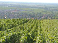 美味しいワインと古城を巡る旅アルザス・ネッカー・マイン・ライン14日③