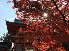 京都 間に合った紅葉  憧れだったわらび餅  久々の再会あぶり餅