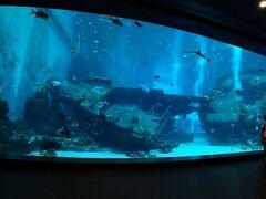 動物ずくめのシンガポールひとり旅 9 シーアクアリウム サメの海の部
