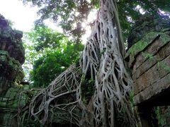 カンボジア・シェムリアップ に行ってきた
