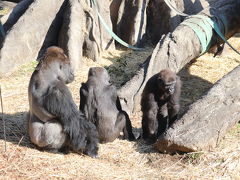 お正月の上野動物園