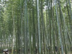 約40年ぶりの京都