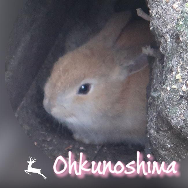 『せとうち広島フリーきっぷ』で行く【1】 うさぎにメロメロ ♪〈大久野島編〉 2020年 1月