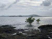 2019年末年始は南インド洋の国々アイランドホッピング(7)フランス海外県マヨットのマムズ編