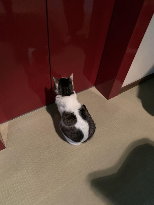 草津温泉に猫のいる旅館があると聞いてさっそく行ってきました!!<br />旅館の猫ちゃん達が可愛かった…<br />もちろん草津温泉もしっかり周りました!