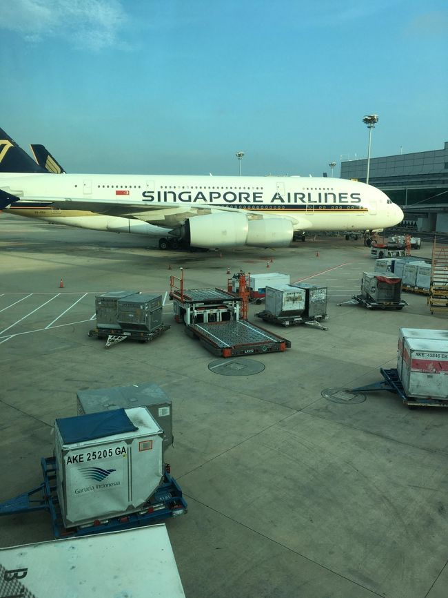 トランジットで到着したシンガポールは朝4時30分。<br />日本行きの飛行機の出発は8時30分。<br />搭乗ゲート解散にしても2時間近くは自由時間がある。<br />結構買い物に行かれるお客様が多くて驚いた。やはり日本人は元気だ。<br /><br /><br />昨晩の21時30分発の飛行機でカトマンズ空港を旅立った私たち。<br />ただ、このカトマンズ国際空港はアナログでなかなか手ごわい空港であり、<br />荷物チェック→チェックイン→出国手続き→とどめの荷物検査<br /><br />という流れで1時間はかかる。<br /><br />ほんと、もうちょっと学習して要領よく搭乗客をさばいてほしい。<br /><br />で、ゲートに行ったらいつアナウンスされるかわからない状態。<br />突然点滅して、搭乗開始となる。これも目が離せないから胃に悪い。<br /><br />ともかく何とか全員シンガポール行きに乗り込み、その後は機内で爆睡。<br />機内食も配られるが、ほとんどの人は手を付けていなかった。<br /><br />