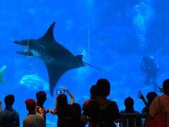 動物ずくめのシンガポールひとり旅 10 シーアクアリウム 大水槽の部